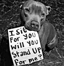 CDAFC Animal Protection Message